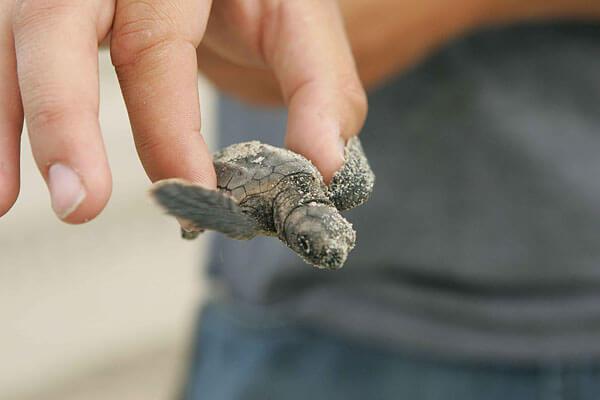 JugendBildungsmesse - Freiwilligenarbeit Schildkröte
