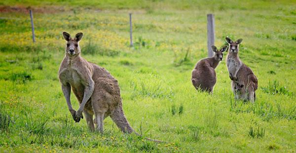 JugendBildungsmesse - High School Jahr Australien Känguru